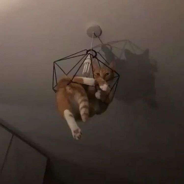 Несколько мест, в которых не может быть кота по умолчанию, но коту все равно