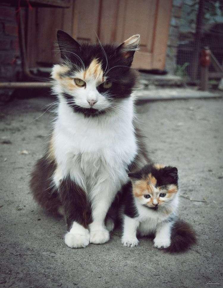 Котята, версия 2.0 папы и мамы. Внешне – один-в-один