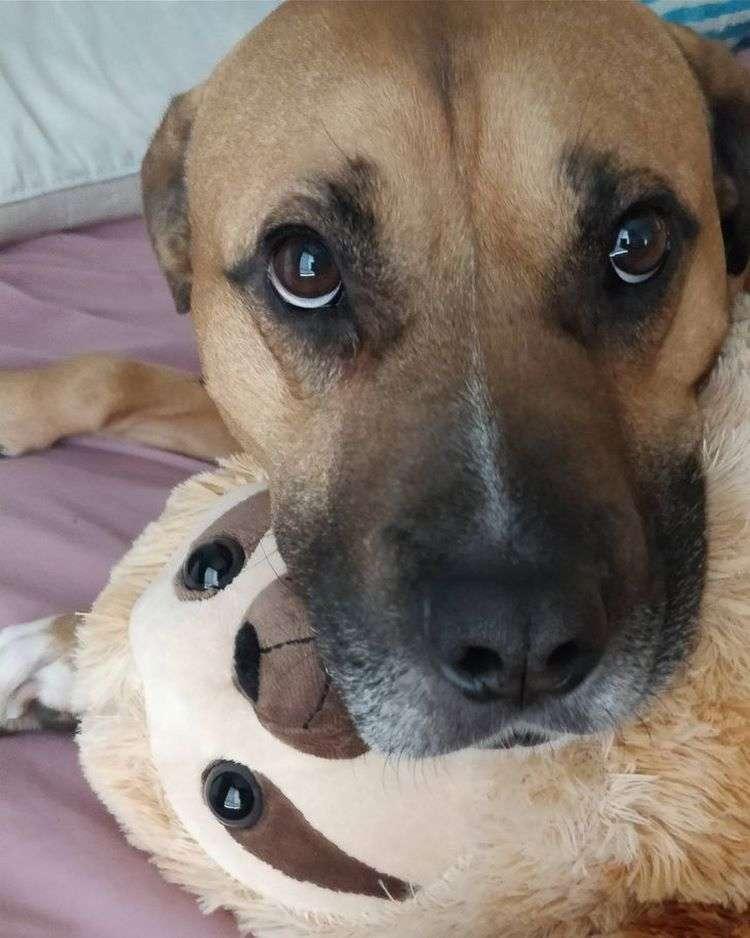 Двенадцать доказательств того, что игрушки важны для животных