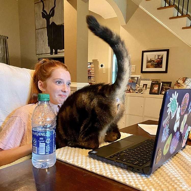 Дюжина котиков, которые шкодят, но очень любят своих хозяев