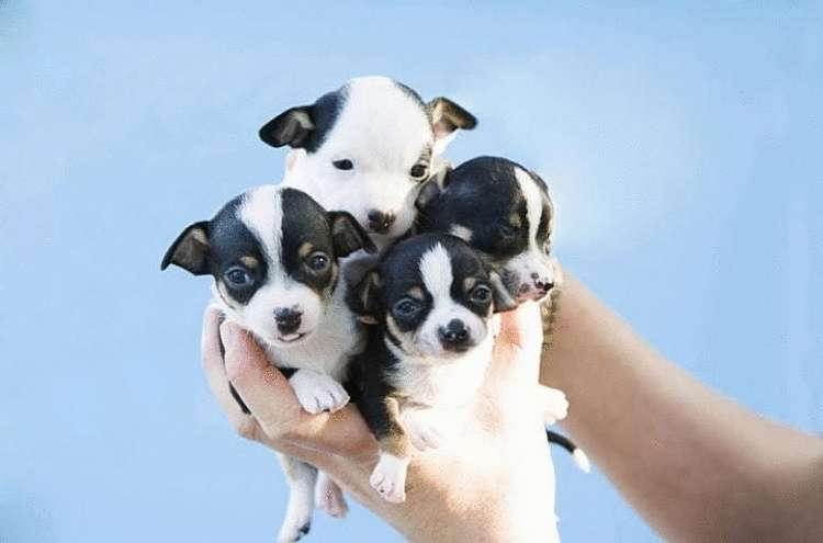 Пост собачей зашкаливающей мимимишности