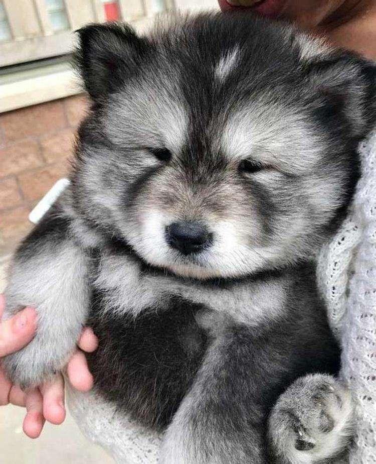 15 очаровательных щенков, доброта, милота и искренность которых зашкаливают