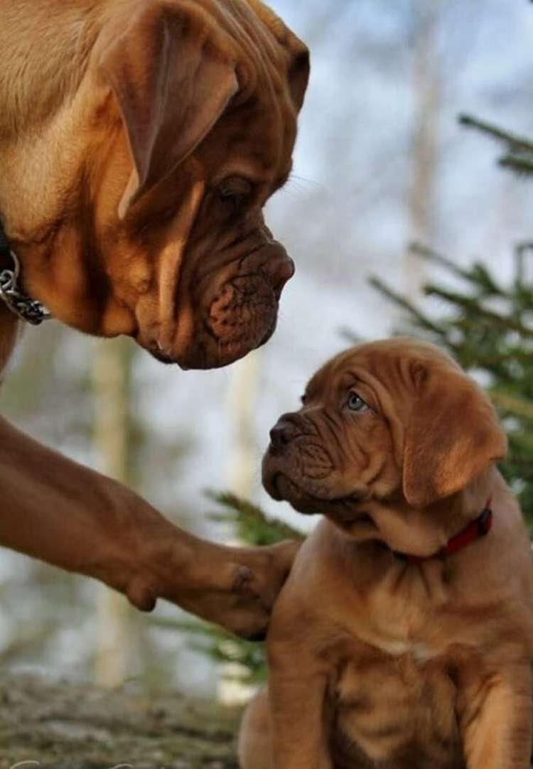 Что такое «семья» для собаки, как она её воспринимает