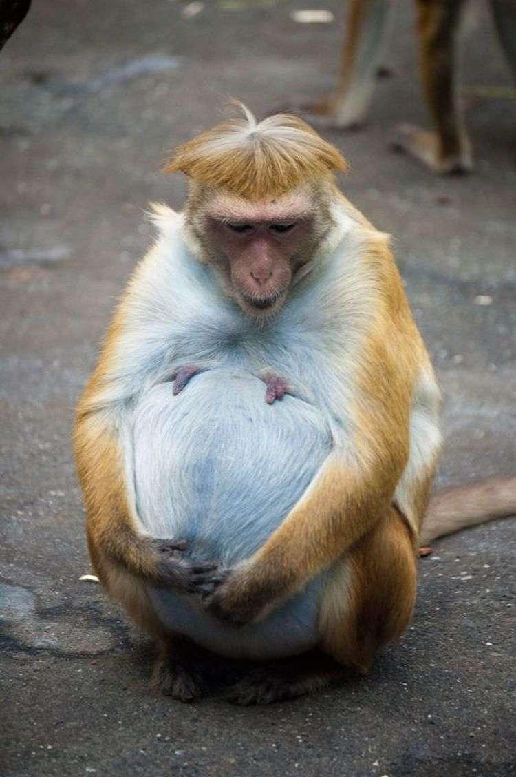 Милые фотографии животных, которые в скором времени станут мамами
