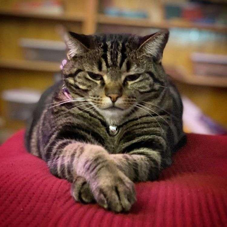 12 фото котов, которые забывают, что они всегда должны быть пушистыми симпатягами