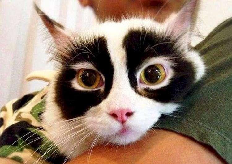 Необычные и восхитительные узоры и окрас 12-ти котов