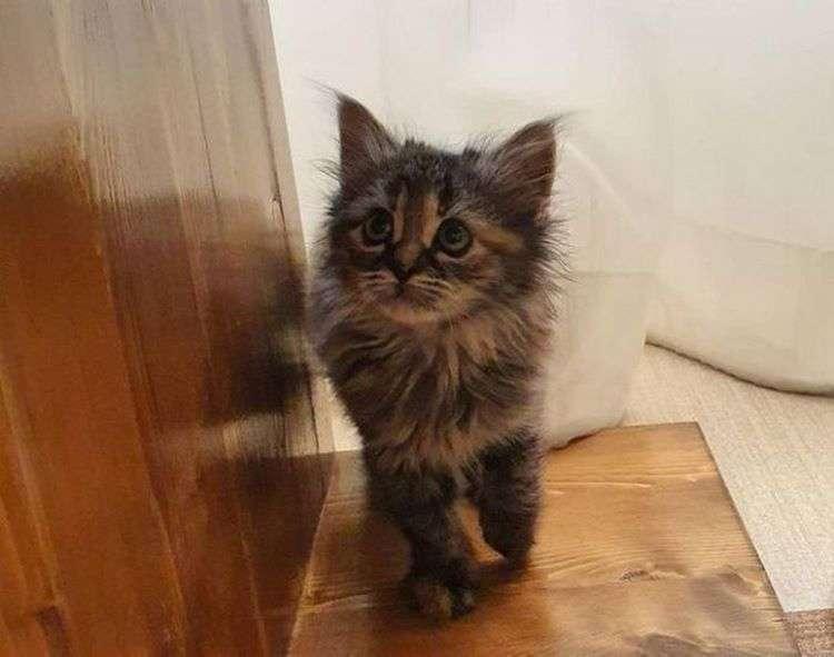 Котенка-сироту спасли добрые люди и что из этого вышло