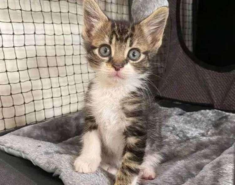 Котенок с обочины вырос в милого котика и смог исполнить свою мечту