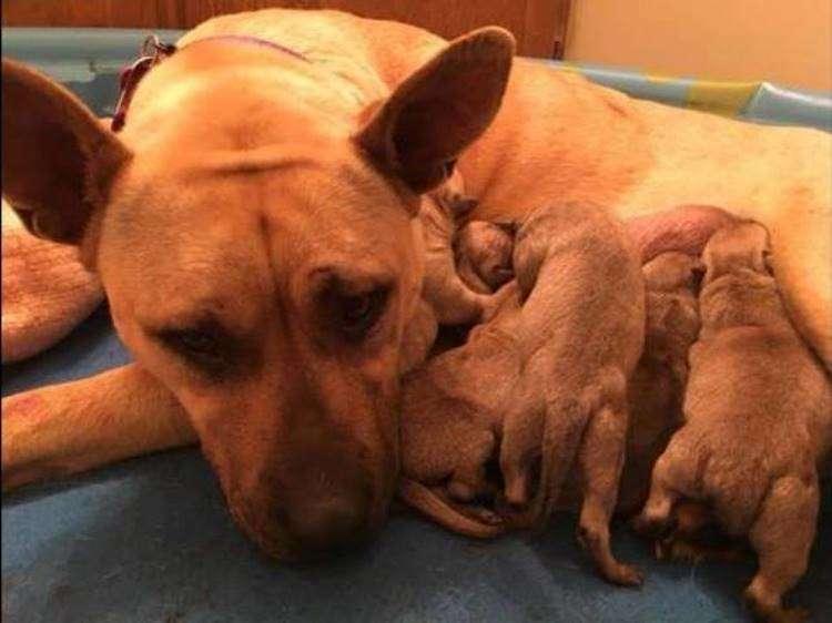 Мужчина помог собаке и этим подарил жизнь шестерым щенкам
