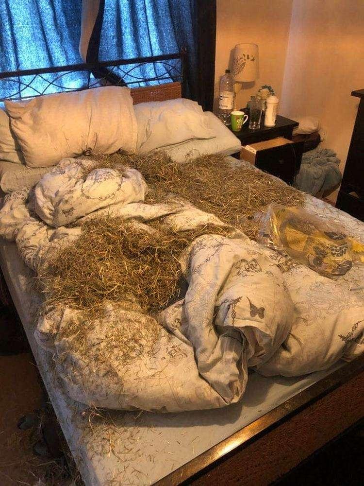 Очередная десятка весьма наглых, но и очень милых вытеснений своих хозяев с их кроватей
