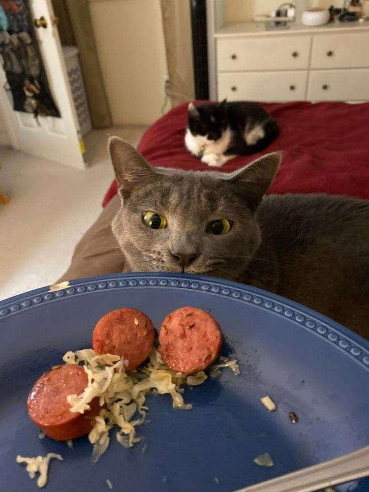 15 бесстыжих котов, которые презирают личное пространство хозяев и нагло в него вторгаются