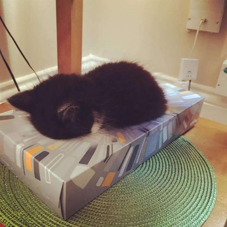 Что такое кошки? Кошки — это волшебство