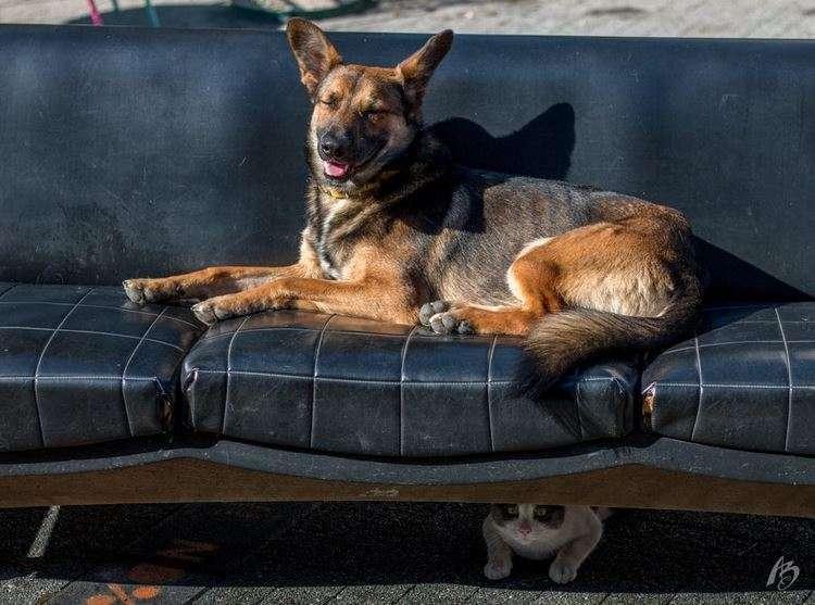 15 котиков и собак, которые спрятались с разной степенью успеха, но одинаково смешно